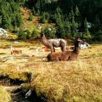 PCT 123 – Jackson Wilderness