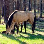 MRT 14 – April 26 -Wild Horses